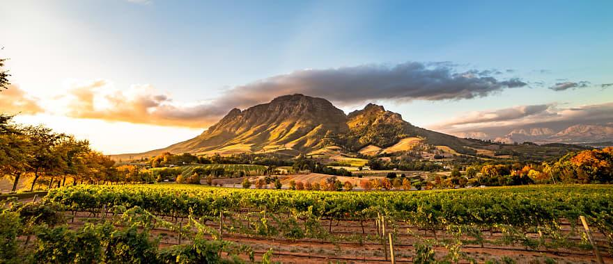 Wine region near Stellenbosch looking at Simonsberg in South Africa.