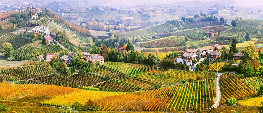Rolling hills in Piedmont to Tuscany during fall.