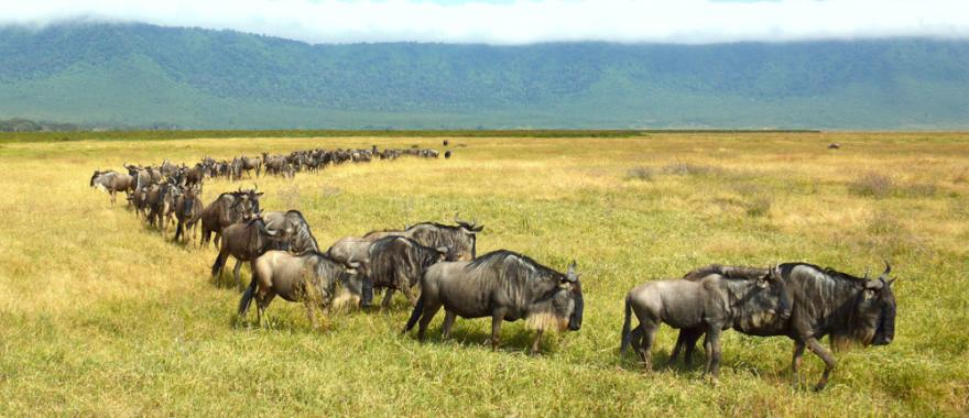 Reviews African Travel Company