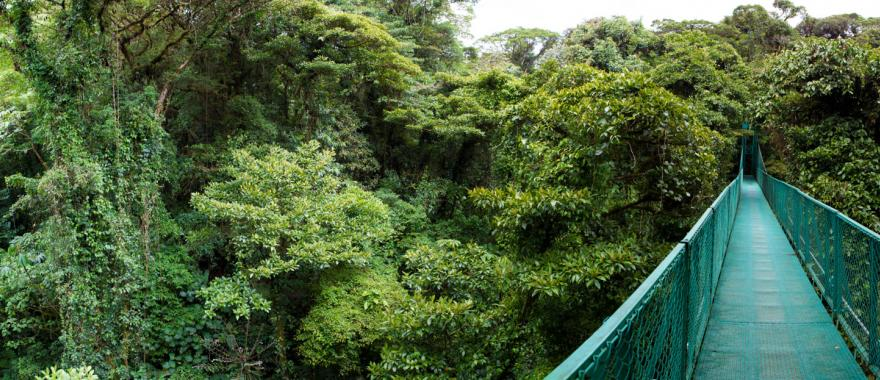 A suspended bridge takes you over the canopy of the Santa Elena Cloud Forest for some impressive views.