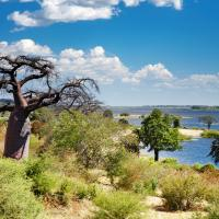 The Chobe River with lush greenery on the river's edge and a baobab tree in the foreground | Botswana, Africa