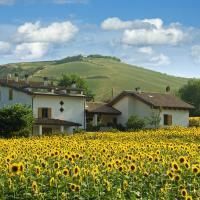 Sunflower fields in Bologna.