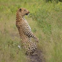 Reviews of Best Namibia Travel Agents - Vacation & Tour