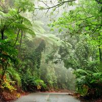 australia road through daintree rainforest national park