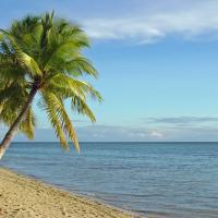 Palm trees on the beach in Fiji.