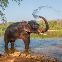 Elephant bathing in the waters of Kerala.