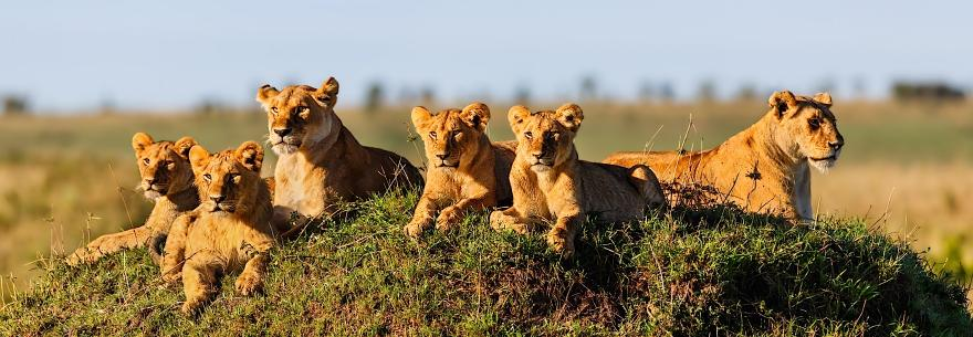 Reviews of Best Botswana Travel Agents - Vacation & Tour Reviews