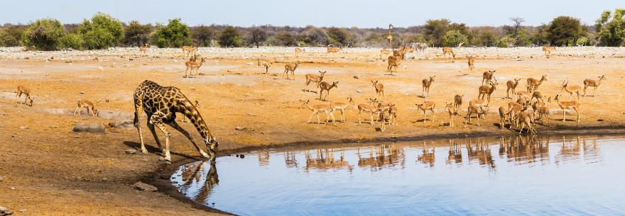 Reviews of Best Namibia Travel Agents - Vacation & Tour Reviews